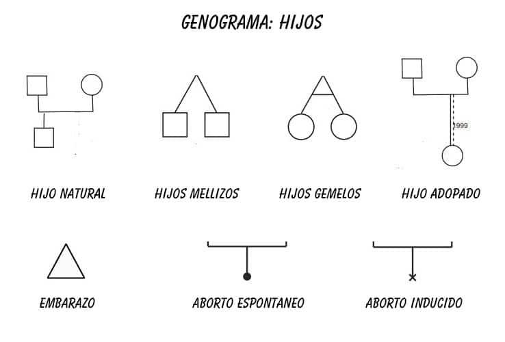 Genograma símbolo hijos, embarazos, abortos