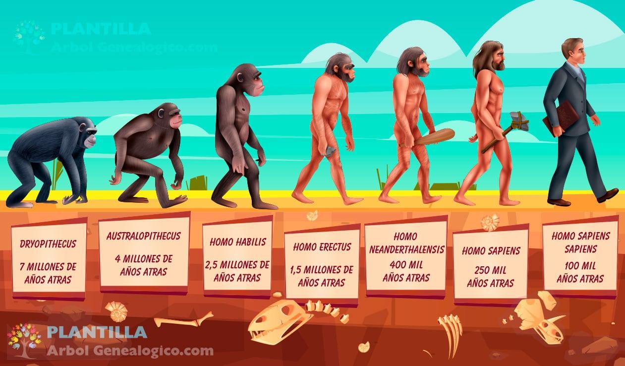 Evolución Humana - Línea de Tiempo